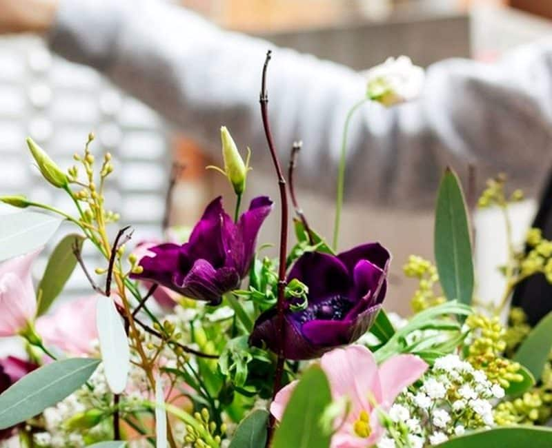Spider Agency Portfolio acacia fleurs et cannelle photo de catégorie livraison